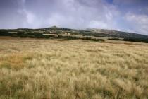 Krkonoše - horské smilkové louky, stanoviště vzácných krkonošských jestřábníků. Je to neuvěřitelné, ale i tady se seklo a páslo...
