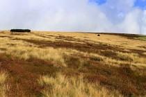 Vysoké Kolo IMG_2289_panorama