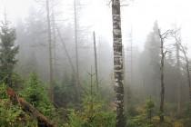 Na Čapím vrchu