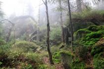 Místy opravdovou divočinou