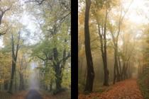 Kvůli zastínění a nedostatku péče má mnoho stromů korunu vytaženou do velké výšky