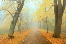 Kouzlo aleje vynikne zejména na podzim