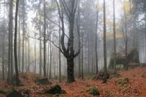V lese pod Čapím vrchem
