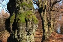 I ty nevzhledné stromy jsou vlastně krásné...