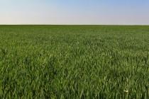 Krajina východního Polabí - dnešní zemědělská výroba snižuje diverzitu krajiny i přírody na úplné minimum