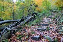 Se zvolna ztrácí s staletém lese