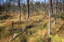 Les se postupně prosvětluje