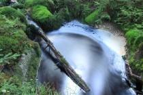 Zdejšími potoky protéká černá rašelinná voda