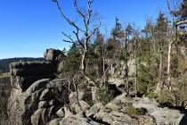 Pokroucené stromy bojují v extrémních podmínkách o přežití