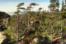 Vzácně se místy se udržel i původní a velmi cenný lesní ekosystém - tzv. reliktní bory