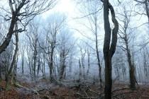I když to tu místy opravdu připomíná prales, byl les dlouho dubu velmi intenzivně formován lidskou činností