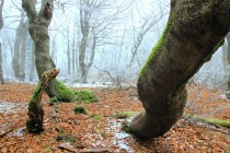 V Rýchorském pralese