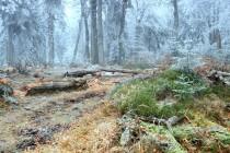Krkonoše - Rýchorský prales, Dvorský les