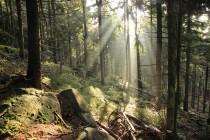 Cestou na Mádrovo pole v lese nad Bischofsteinem.