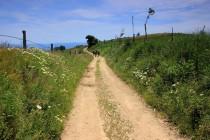 Krásné polní cesty