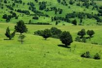 Pastviny s ovocnými stromy