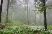 Lesy nad Tureckou dírou