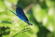 Všudypřítomné motýlice