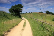 Na Rovensku - krása polních cest...