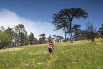 Výstup na Domogled - endemický poddruh borovice černé