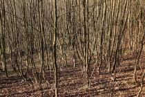 Pole a pastviny pohlcené lesem
