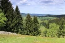 Polská strana nad Kaltwasser - stráně pohltil les