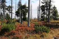 Rašeliniště bylo kdysi obklopeno lesem...