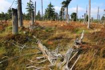 Ale i uschlý les má své kouzlo...