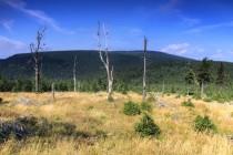 Orlické hory - pohled z Tetřevce směrem na Korunu a Jelenku IMG_2444
