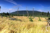 Pohled z úbočí Tetřevce směrem k Deštné. Hlavní hřeben s vrcholy Koruna (Orel) a Homole.