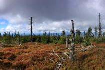 Přirozený běh věcí, nástup nové generace lesa...