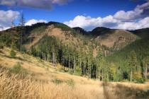 Javoří hory - Pod Homolí