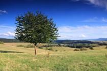 Polní cesty stoupají přes pastviny