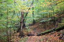 Nejlépe přijít po lesních stezkách směrem od Sedloňova. Hned nad vsí začíná krásný les.
