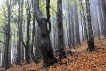 Informační tabule mluví o pralesu, ale staletých stromů je tu poskrovnu...