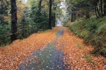 Rezervací prochází i asfaltka, která vede k linii hraničního opevnění.