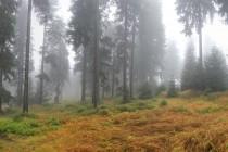 V horské smrčině nad Sedloňovem