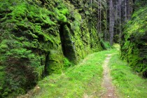 Nejlépe vyrazit z Vlčí rokle po staré dřevařské cestě, která začíná průchodem tesaným do skály.