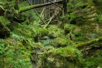 Ztrácející se cesta stoupá soutěskou přes několik skalních prahů.