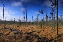 Wielkie Torfowisko Batorowskie - rašeliniště jako typické stanoviště pro masožravé rostliny