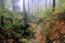 Krásné a cenné jsou i lesy v ochranném pásmu rezervace