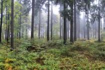 NPR Bukačka v Orlických horách - ochranné pásmo