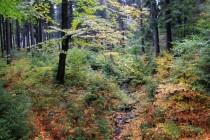 Les se tu obnovuje přirozeným zmlazením a to i přes značný tlak ze strany přemnožené spárkaté zvěře