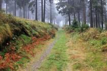 Na Bukačku nejlépe  přijít pěšky přes Sedloňovský vrch a Šerlišský mlýn. Původní lesy tu sice již dávno nahradily nepůvodní smrčiny, i přesto má však zdejší horský les své kouzlo...