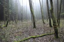 Olšina uprostřed smrkového lesa. Ještě před padesáti lety tu byla louka s chalupou...