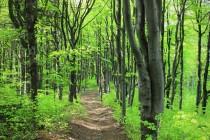 Bardské hory - místy krásné bukové lesy
