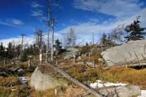 Kůrovec zdejší lesy pořádně pročistil
