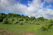 Poslední zbytky lesostepí v kulturní zemědělské krajině
