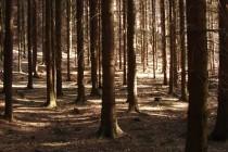 """Tyhle """"přírodní lesy"""" se od těch intenzivních smrkových monokultur hodně liší..."""
