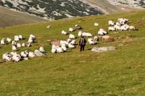 Pohoří Tarcu - dobrý pastýř, foto - FL